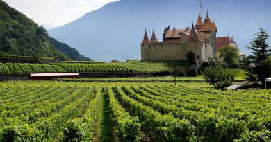 Best Wine Regions of France